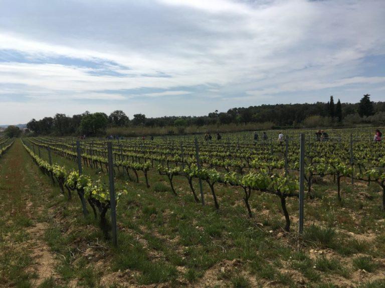 vinyers capmany